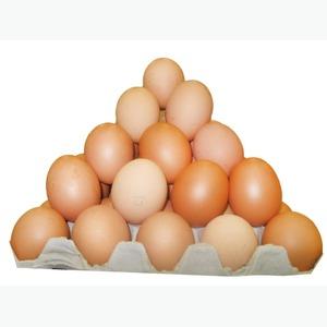 Закупаем оптом в больших объемах яйцо куриное