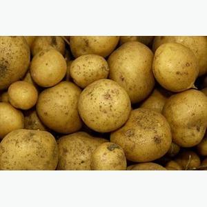 Куплю картофель оптом от производителя