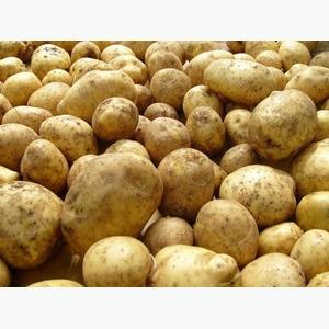 Куплю картофель крупным оптом