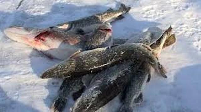 чат рыболовов омска