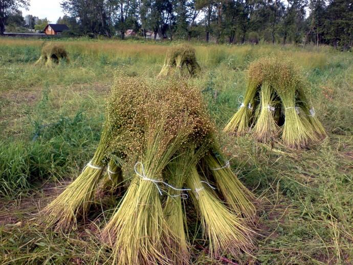 семена льна от холестерина форум